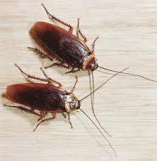 уничтожение тараканов